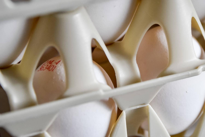 Eierverkoop van witte eieren in onze automaat
